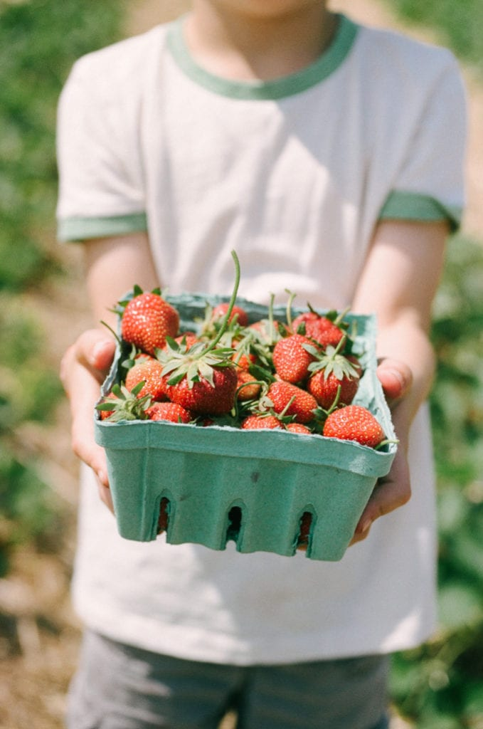 A boy holding a pint of fresh strawberries picked from a local pick-your-own farm.