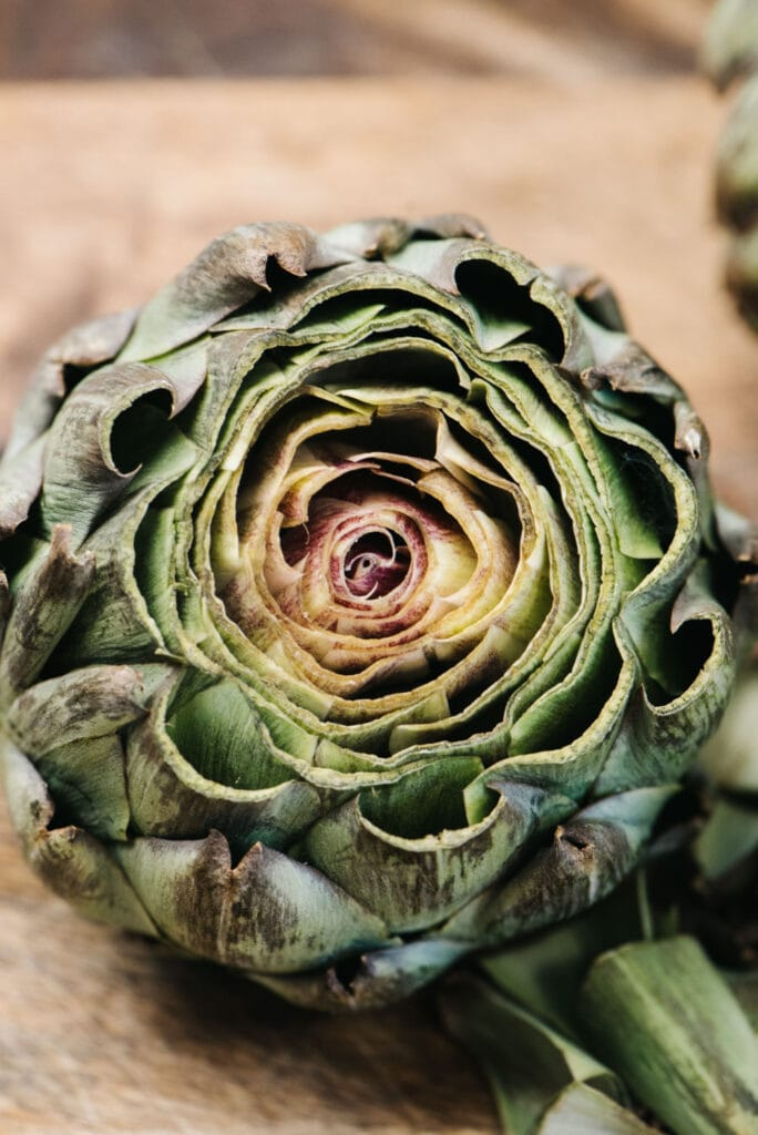Side view of a whole artichoke with the top trimmed off.