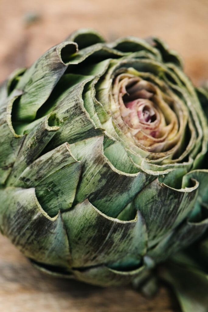 Side view, a whole artichoke prepared for cooking - top, leaf tips, and stem trimmed.