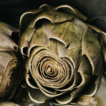 Side view, steamed instant pot artichokes in the inner pot of a pressure cooker.